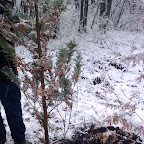 Зимняя уборка в Дендрарии 007.jpg