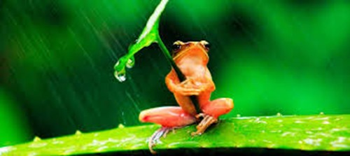 save frogs