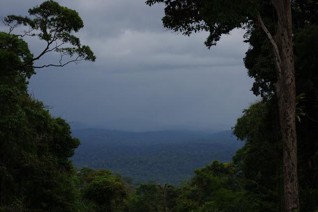 Panorama depuis Camp Caïman (Montagne de Kaw), 26 octobre 2012. Photo : J.-M. Gayman