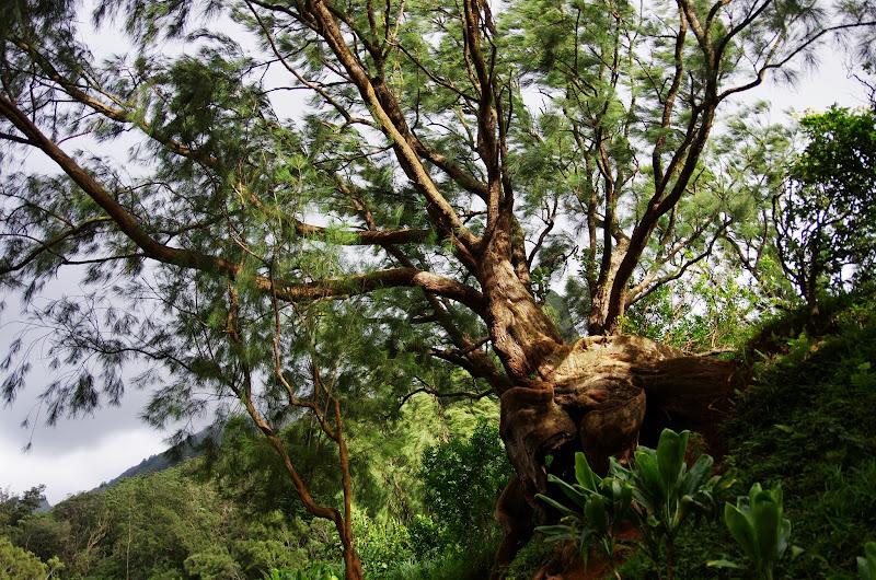 06-18-13 Waikiki, Coconut Island, Kaneohe Bay - IMGP6974.JPG