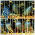 Tips memilih burung jalak dikandang ombyokan