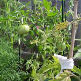 Gardening 2010, Part Two - 101_2715.JPG
