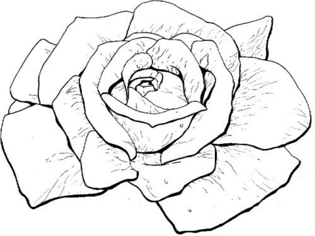 Modest Rose Coloring Pages