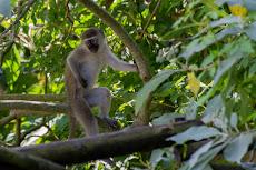 Monkeys everywhere...