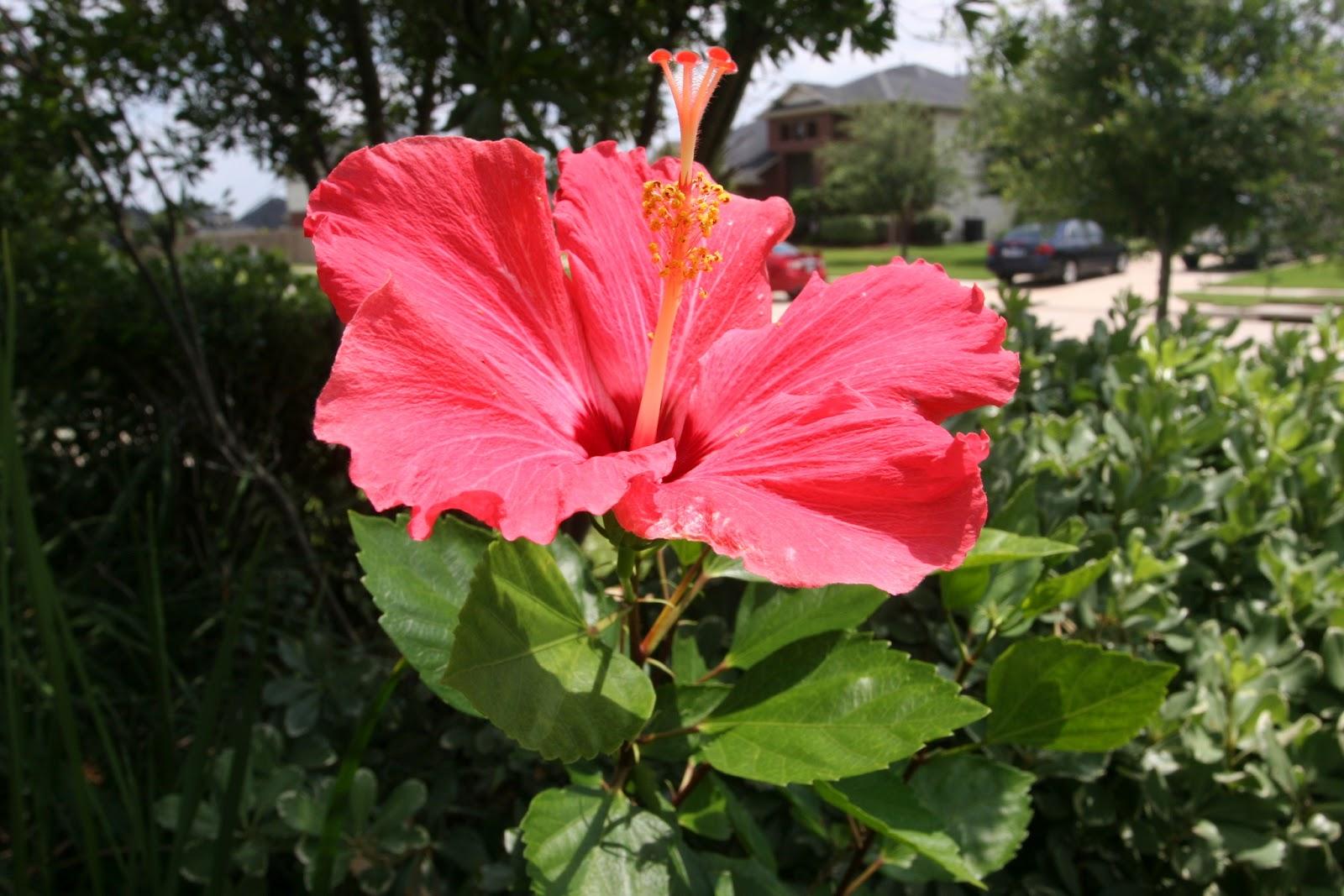 Gardening 2012 - IMG_3857.JPG