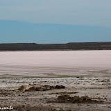 Salar - Península Valdez, Argentina