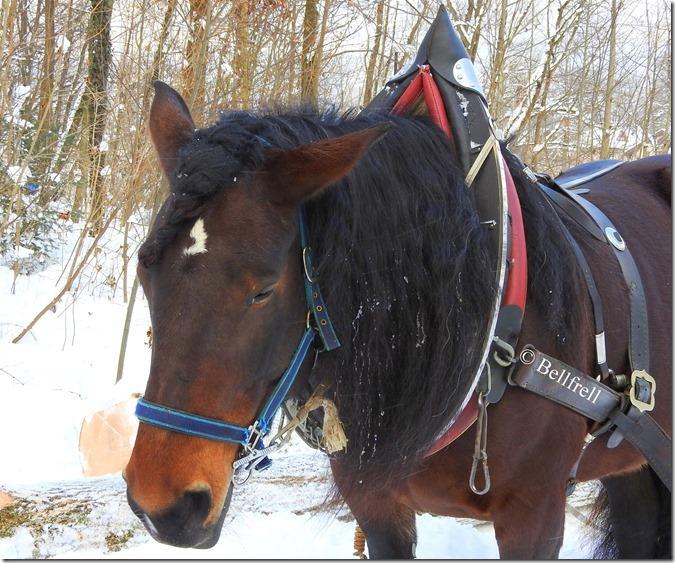 Pferd mit Zopf