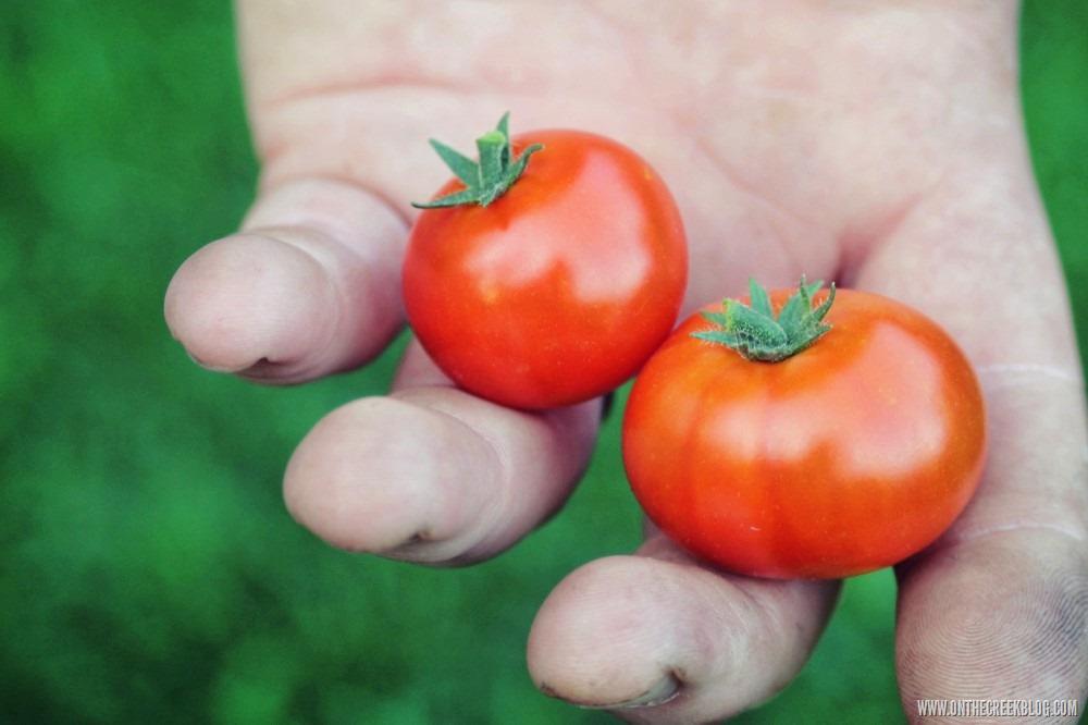 [garden2%5B7%5D]