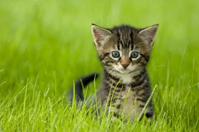 little kitten playing on the grass close u
