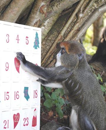 monkeycal