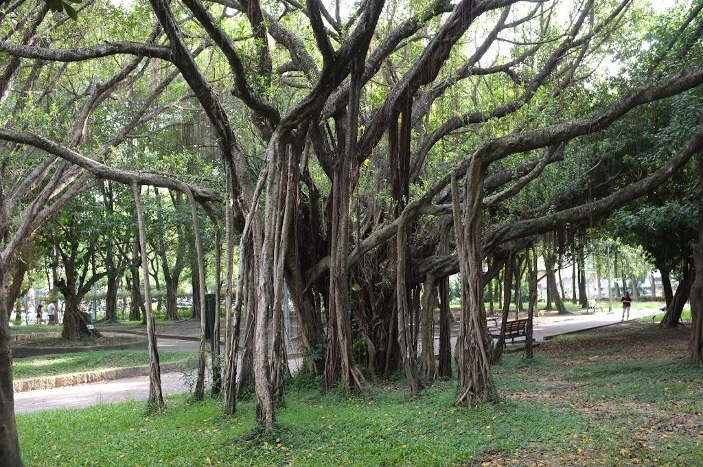 Daan Park in Taipei
