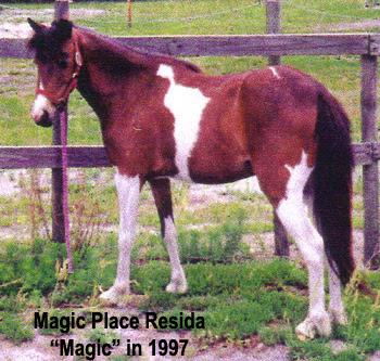 Magic - Magic Place Resida - Florida, 1997