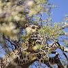 051-luipaard-2.jpg