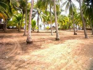 Playa Garita Palmera