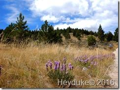 Hidden Lake Trail Glacier NP MT 002