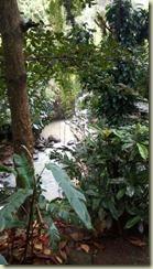 IMG_20180130_Annandale Falls 2
