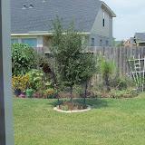 Gardening 2010, Part Three - 101_5352.JPG