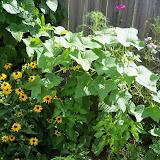 Gardening 2010, Part Three - 101_5005.JPG