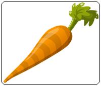 คำศัพท์ภาษาอังกฤษ_carrot_Vegetable