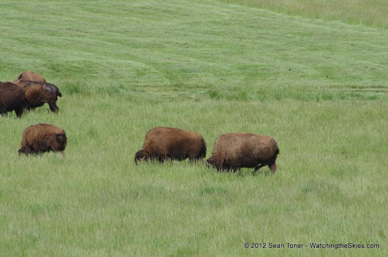 05-11-12 Wildlife Prairie State Park IL - IMGP1558.JPG