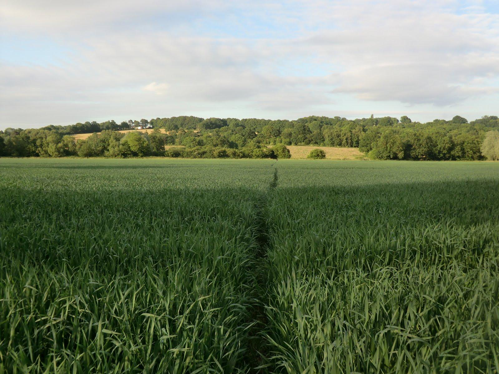 CIMG7334 Through a field back to Ashurst
