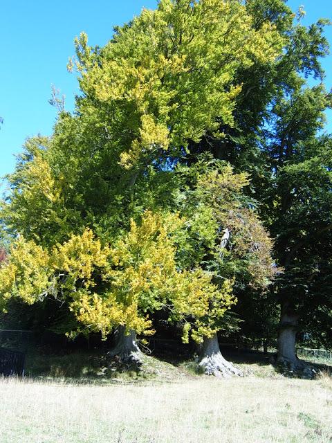 tree in blenheim grounds