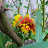 Gardening 2011 - 100_6959.JPG