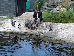 Pingvinene