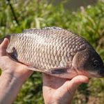 20160730_Fishing_Privitne_016.jpg