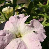 Gardening 2012 - IMG_3146.JPG