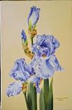 błękitny irys, olej, płótno, 27/41 cm, własność prywatna