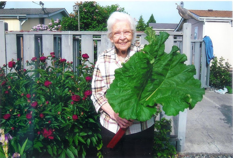 Dorothy and her rhubard - She loved Rhubarb and grew lots of it up in Sequim.
