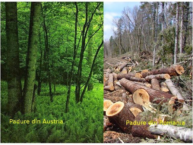 Protest pentru salvarea pădurilor din România #1