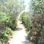 Sandy track on Botany Bay National Park (309515)