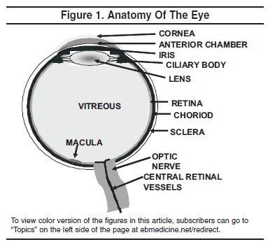 Proposed Regulatory Mechanism Of Pterygium Ocular Anatomy