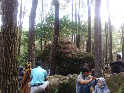 watu-tumpang-hutan-pinus-mangunan