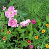 Gardening 2010, Part Three - 101_3566.JPG