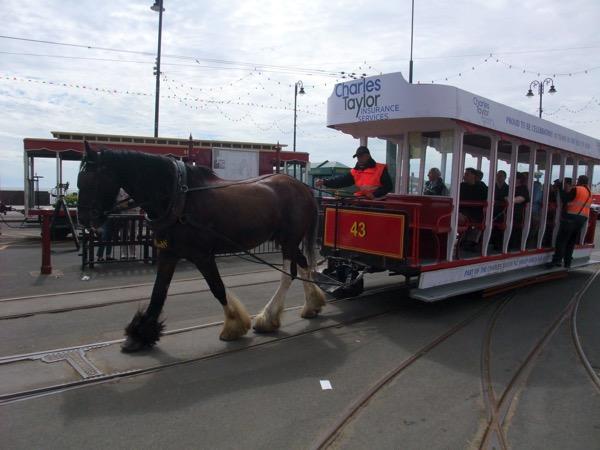 Horse Tram 0