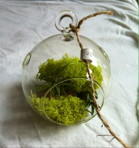 mother hen 39 s homestead how to take care of air plants. Black Bedroom Furniture Sets. Home Design Ideas