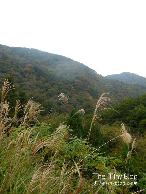 Ryuokyo Nikko Japan Forest Trekking Mountain October 2015