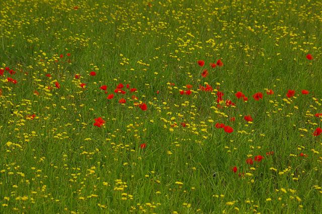 Les Hautes-Lisières (Rouvres, 28), 21 juin 2011. Photo : J.-M. Gayman