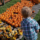 Pumpkin Patch 2015 - 100_0406.JPG