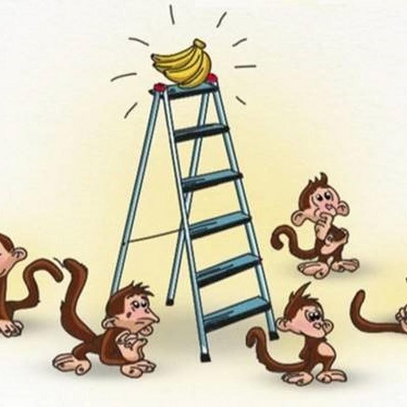 """5 con khỉ và 1 nải chuối: Bài học về những nhà lãnh đạo """"vùi dập"""" và nhân viên """"mù quáng"""""""