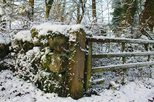 14-snow