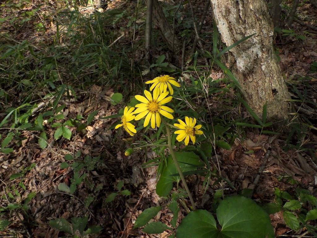 林内で咲く花