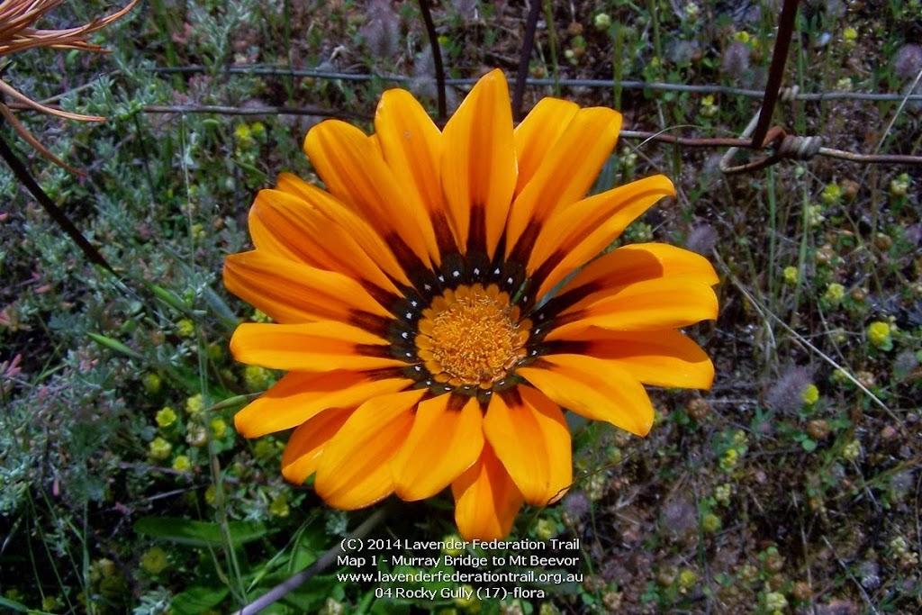 04 Rocky Gully (17)-flora