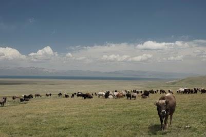Rund um den Song Köl grasen Schafen, Kühen und Pferde