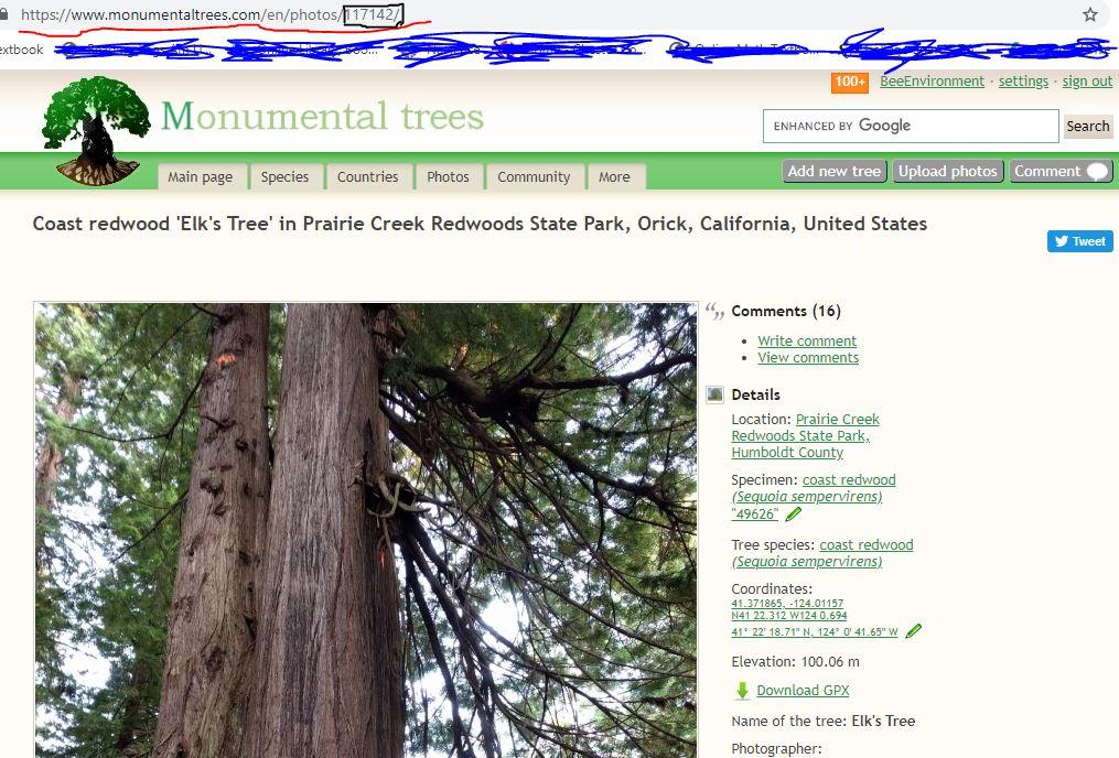 je 50 Bäume 30 und 50 mm hoch 100 hellgrüne Laubbäume