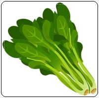 คำศัพท์ภาษาอังกฤษ_spinach_Vegetable