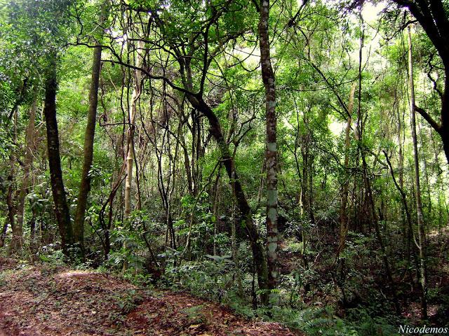 Remanescente da Mata da pedreira. Pitangui (MG, Brésil), 24 mars 2010. Photo : Nicodemos Rosa